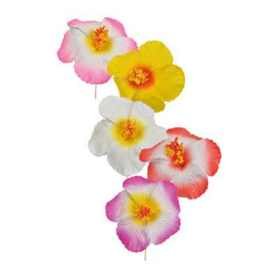6 hibiscus pm